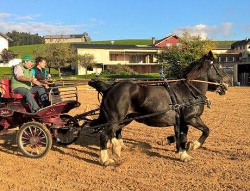 Tag des Pferdes und Vereins-meisterschaft