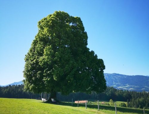 wanderbares Langenegg: Lindenweg